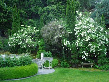 Gardenblogpic