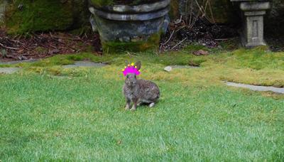 Bunny_crown2